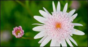Langenhoven BB Flowers